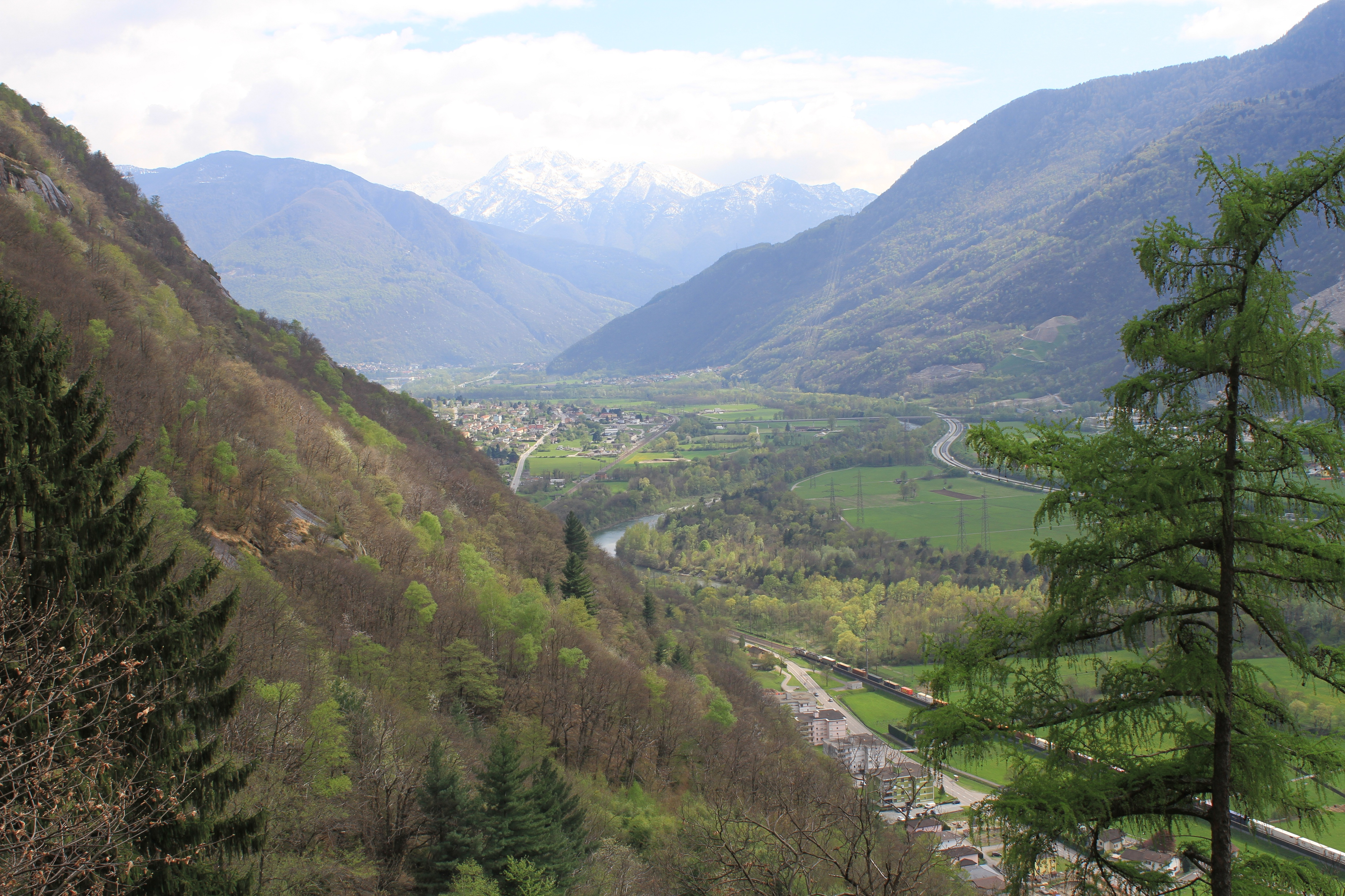 View on the Southern Ticino out of the wood